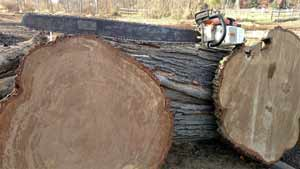 49 inch chainsaw capabilities for slabs and slabbing, cutting cookies or breaking down oversized logs.